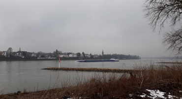 Rhein in Königswinter